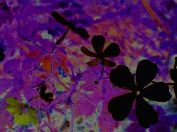 Name:  the flowers of evil.jpg Views: 84 Size:  39.7 KB